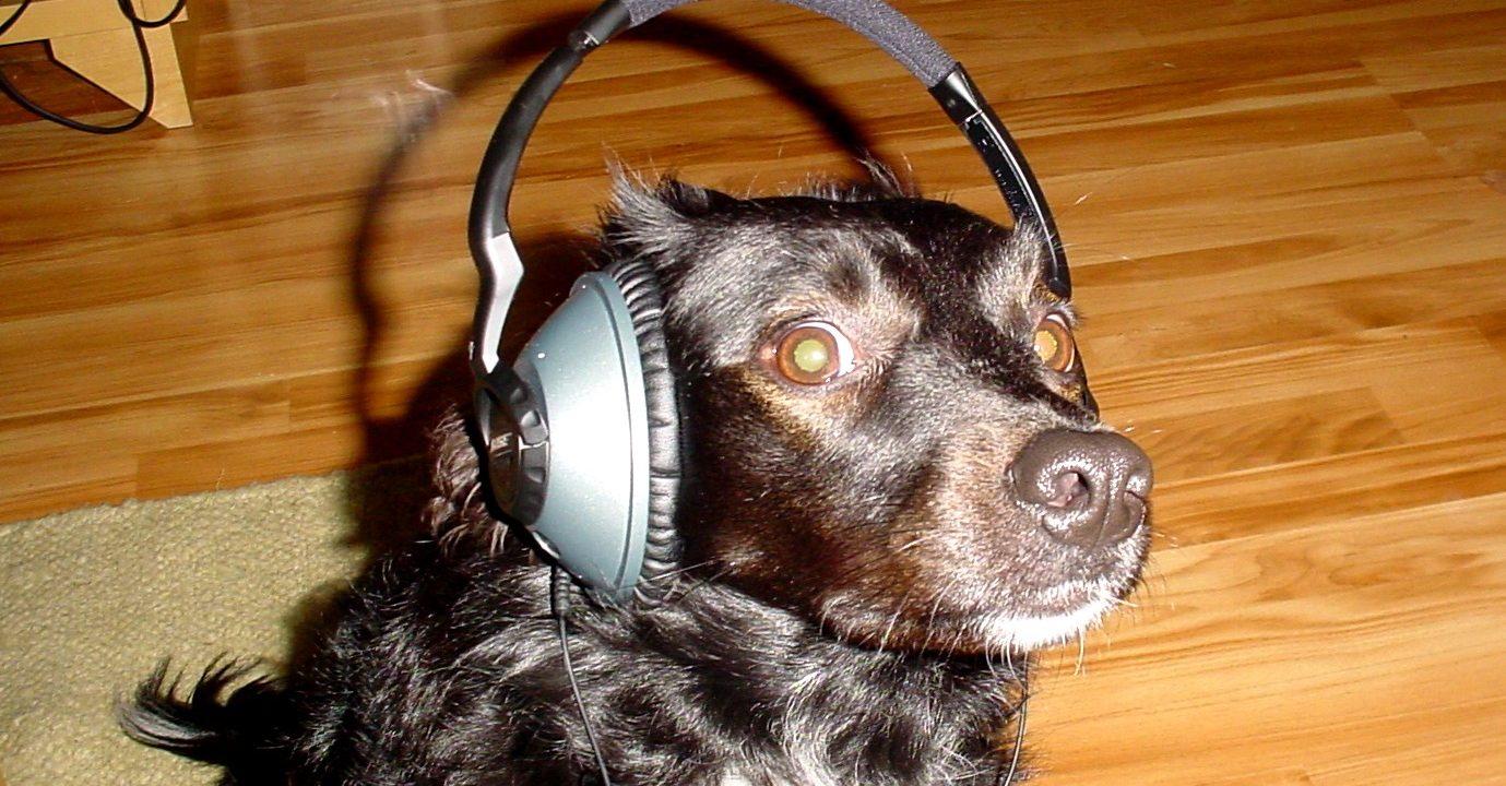 Bose dog